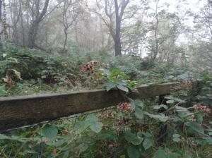Late season blackberries, Rivington Pike's Terraced Gardens.